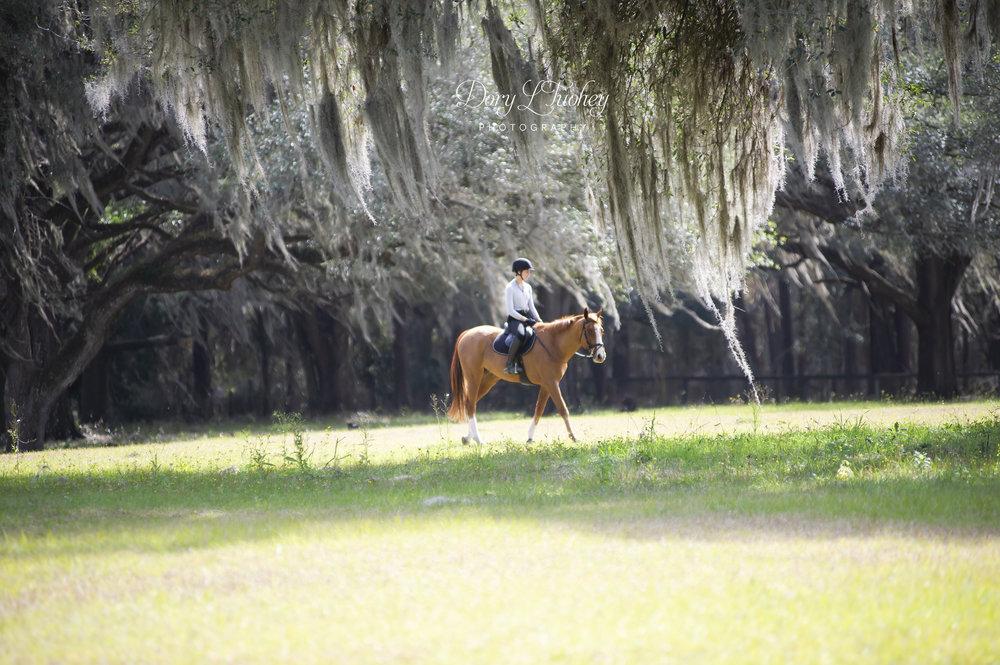 Ocala_FL_horses_spanish_moss_reddick_farm_eventers_eventing_barnstaple_winter_01.jpg