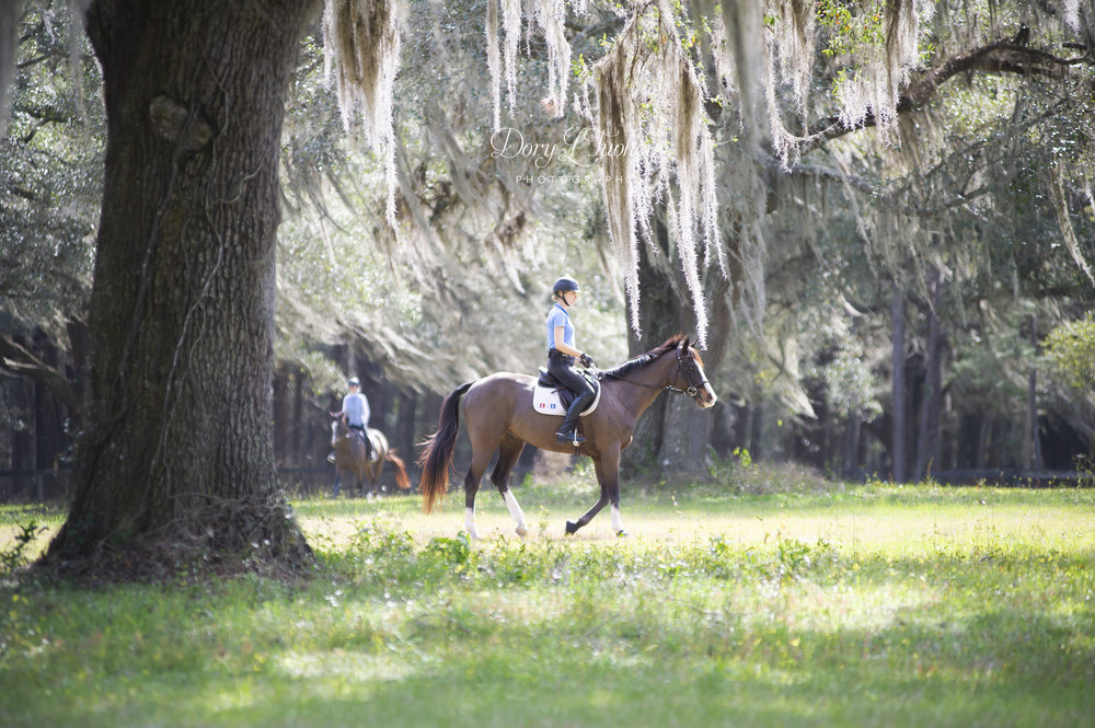 Ocala_FL_horses_spanish_moss_reddick_farm_eventers_eventing_barnstaple_winter_02.jpg