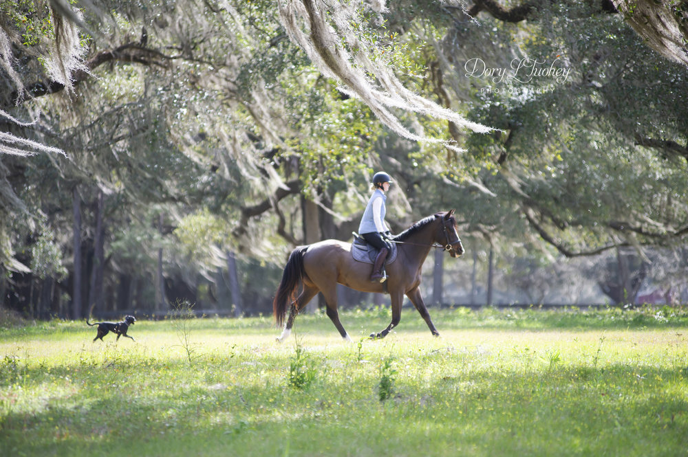 Ocala_FL_horses_spanish_moss_reddick_farm_eventers_eventing_barnstaple_winter_03.jpg