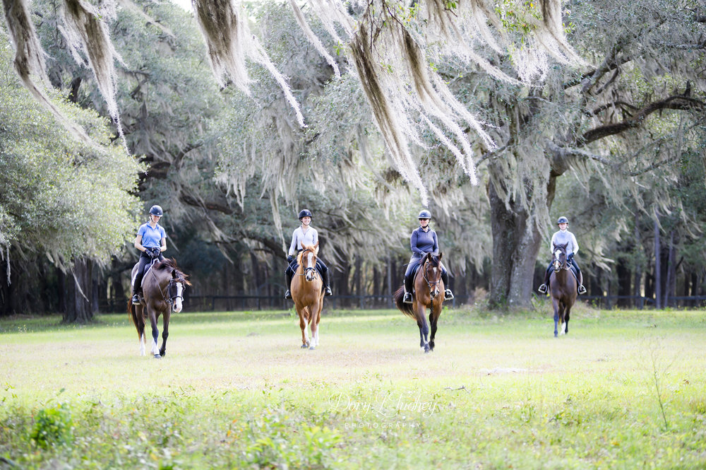 Ocala_FL_horses_spanish_moss_reddick_farm_eventers_eventing_hidden_gem_equine_barnstaple_winter_06.jpg