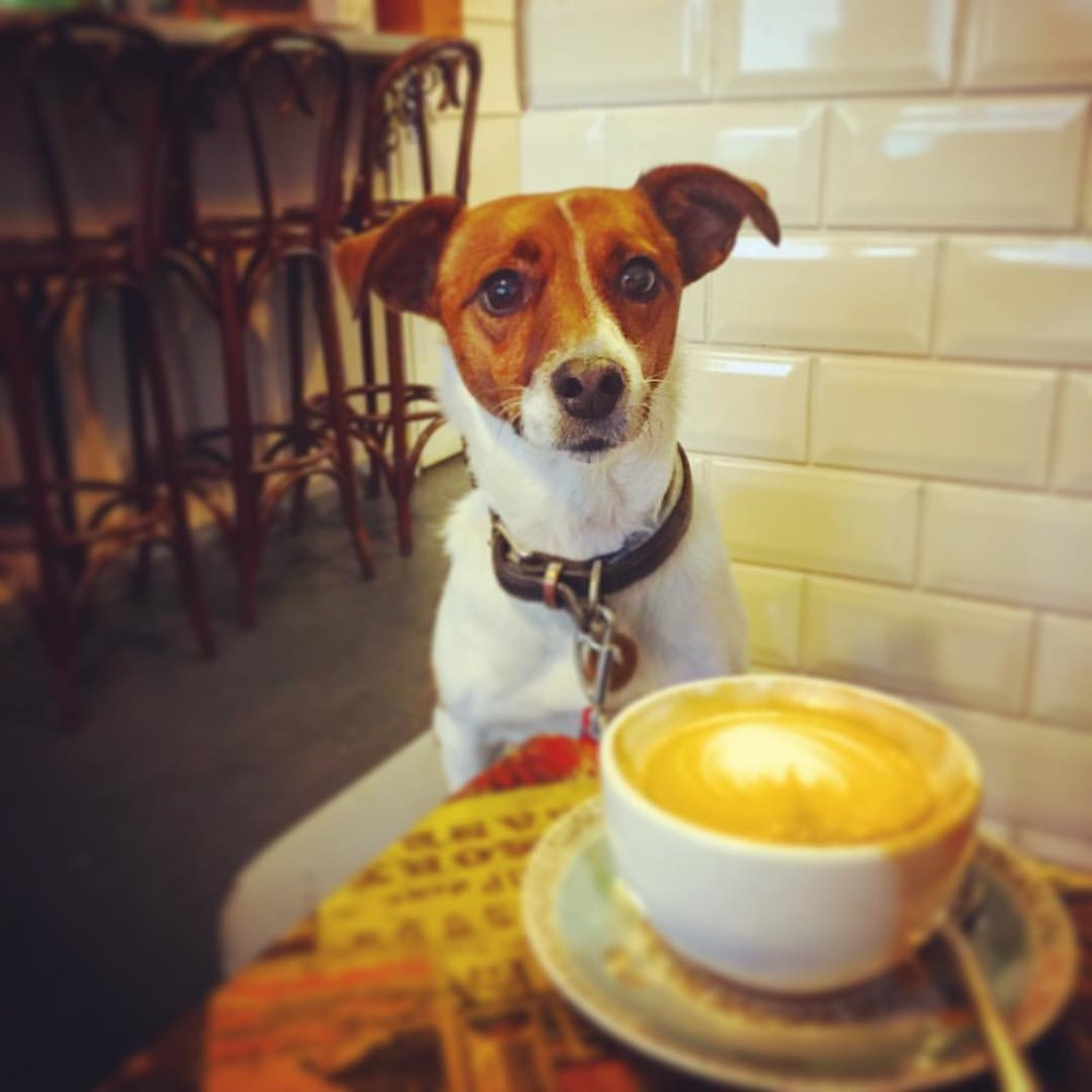 Eddie eyes my coffee, London, 2016