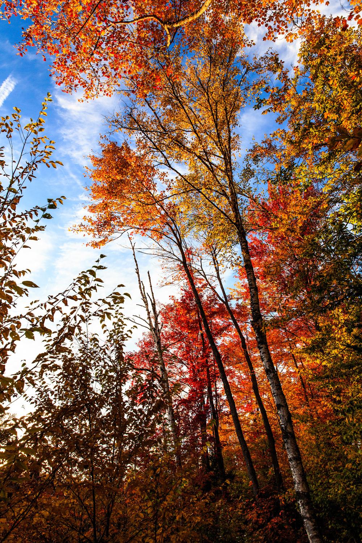 Vermont-3693.jpg