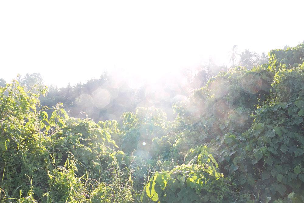 lense flare in Bali