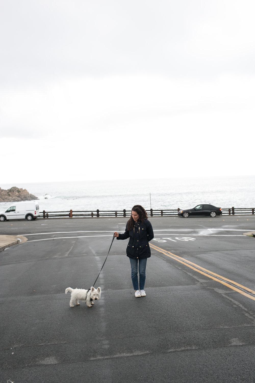 westie walk - happinesscollective.org