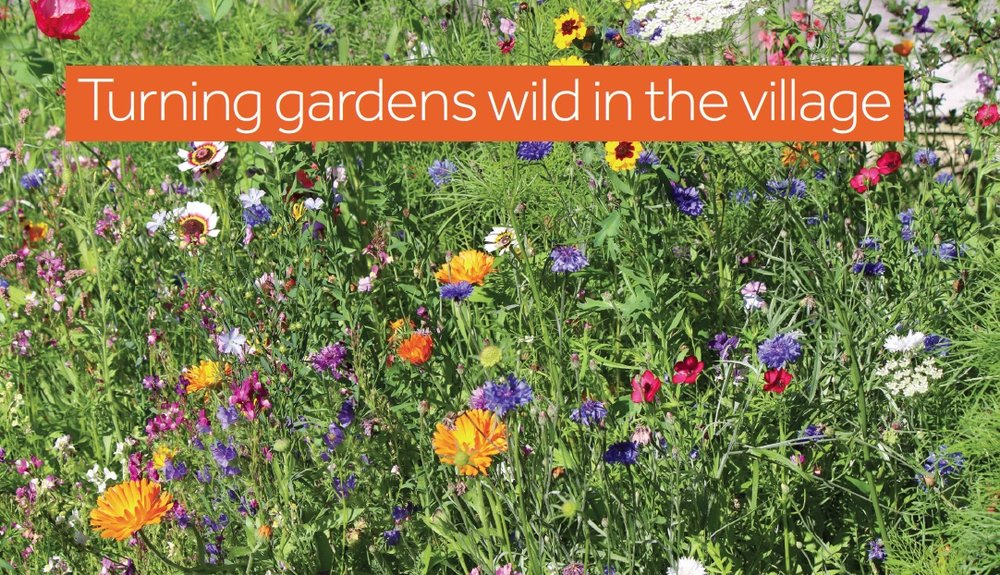 Make a wildflower garden or patch in your Cuckfield garden