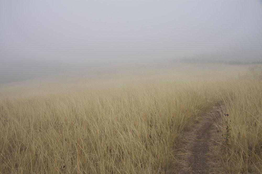 Soapstone Fog