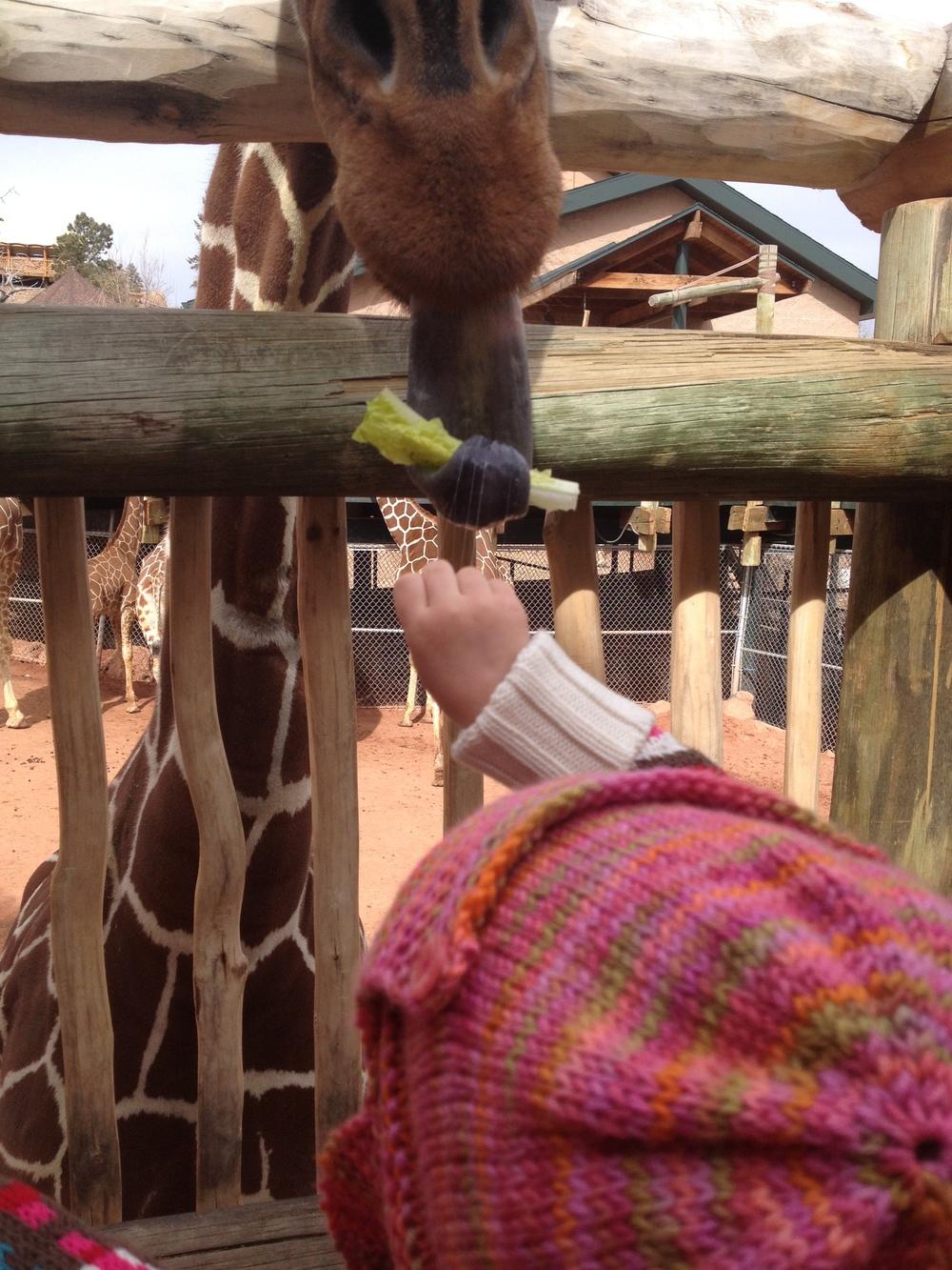 sticky, gooey giraffe tongues!