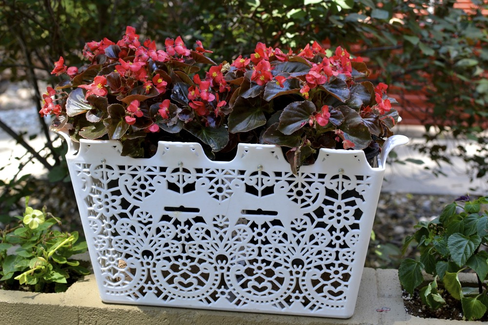 not a succulent or cacti, obviously, but a fun idea on how to repurpose a container.  this used to be my beloved bicycle basket, until my bike fell over and this was crushed.  after a little hot clue and some pretty florals, it fits right in with our garden!