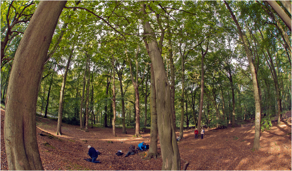 2_Hanbury woods_fisheye.jpg