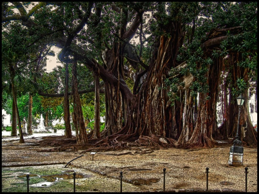 1_banyan tree_jeremy richardson.jpg