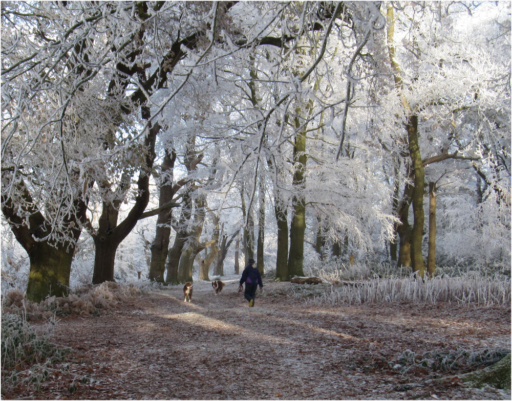 2_A frosty walk_Margaret Townley.jpg