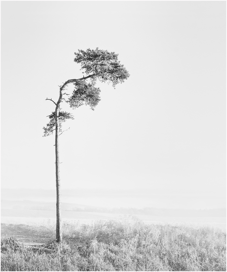 1_Lonesome Pine_Audrey Couchman.jpg