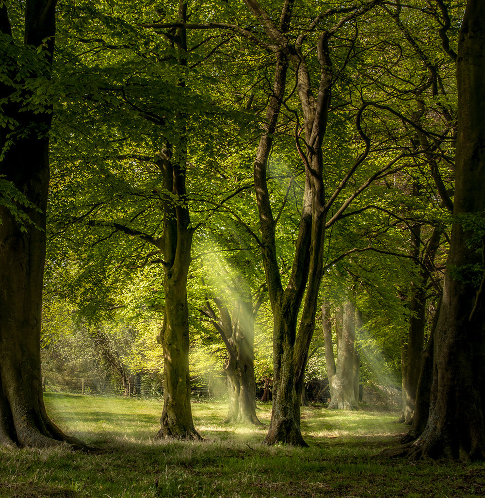 2_Light Through The Trees_Mark Chambers.jpg