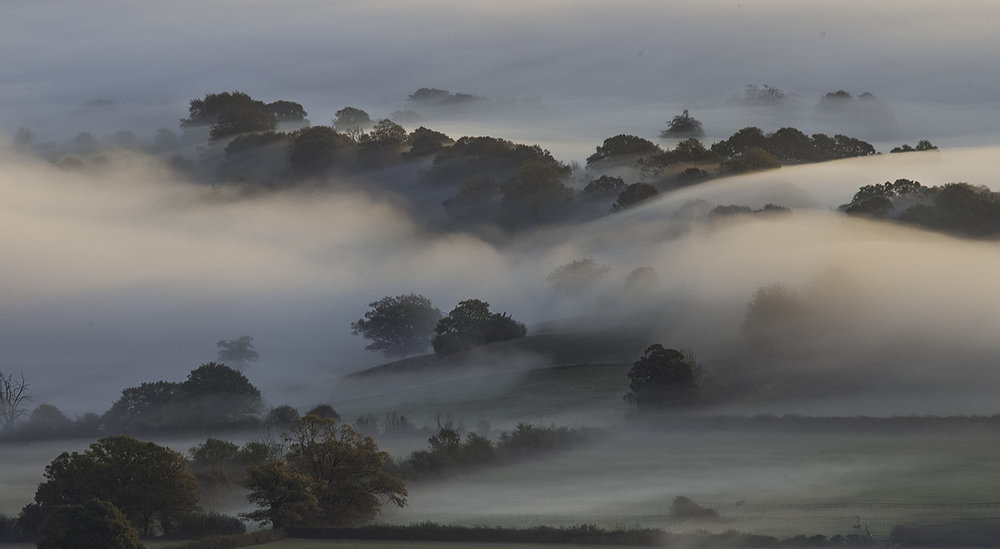 1_Clustered in Mist_Clive Turner.jpg