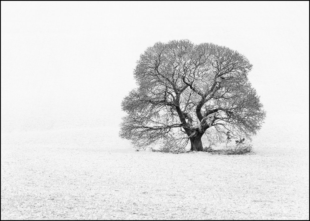 2_Winter Tree_Robin Couchman.jpg