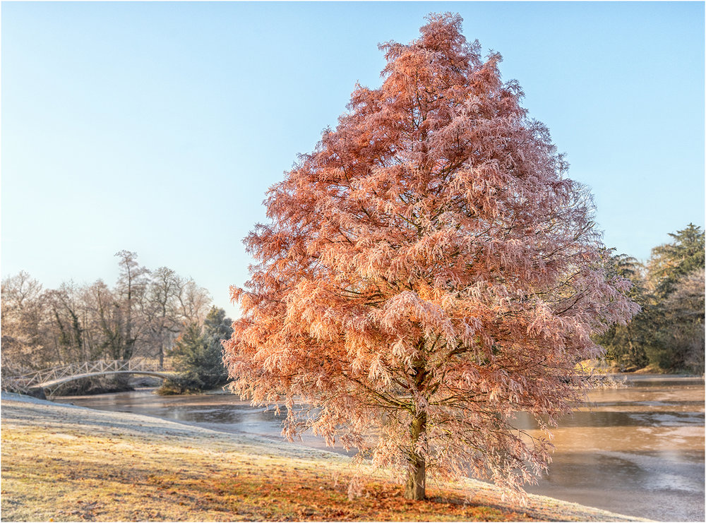 1_Frosted Tree_Ric Harding.jpg