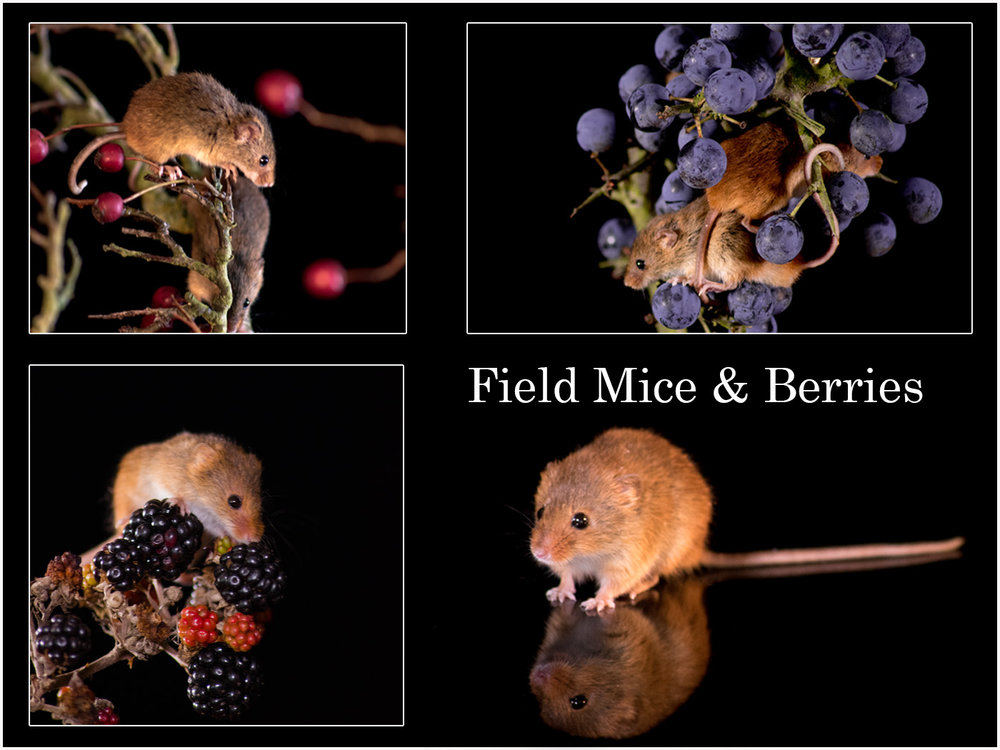 """Field Mice and Berries"" by Andrew Bradbury"