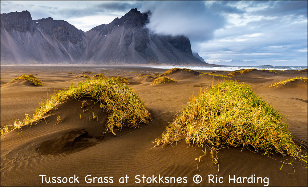 Tussock Grass at Stokksnes.jpg