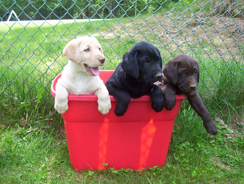 tub_o_puppies.jpg