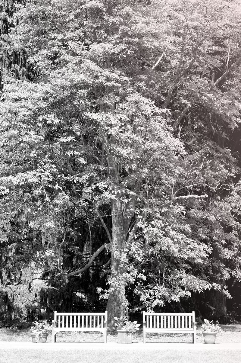 innis_garden.jpg