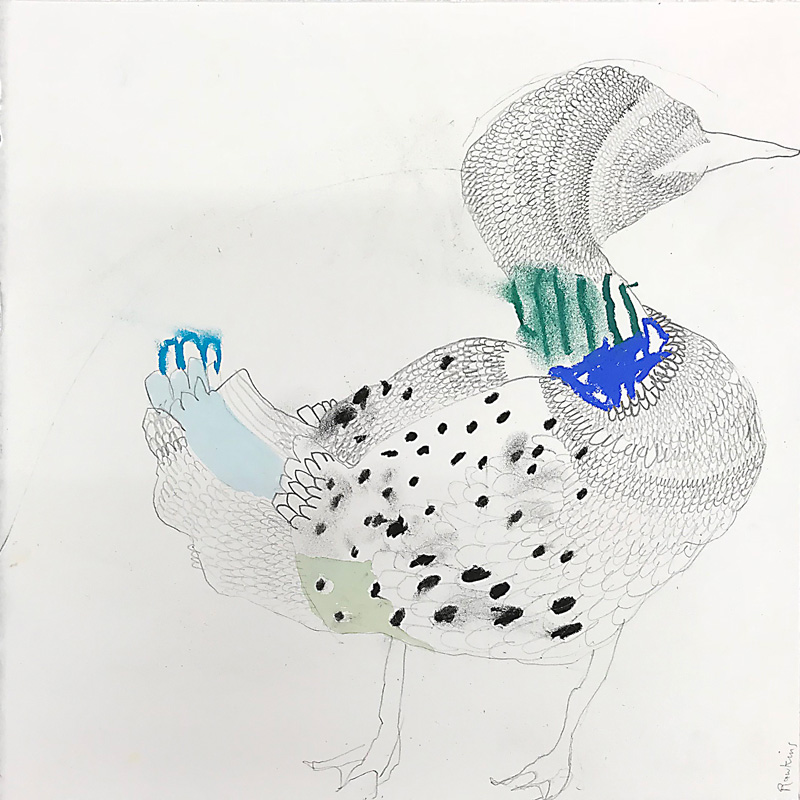 Common Loon  2017 Graphite, gouache and charcoal on paper 30 x 30cm