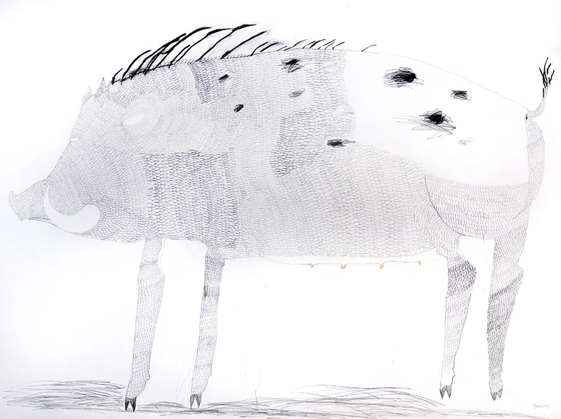 Wild Pig  2016 Graphite and charcoal on paper 56 x 76cm