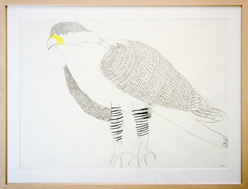 Falcon  2015 Graphite, gouache, charcoal on paper 56 x 76cm