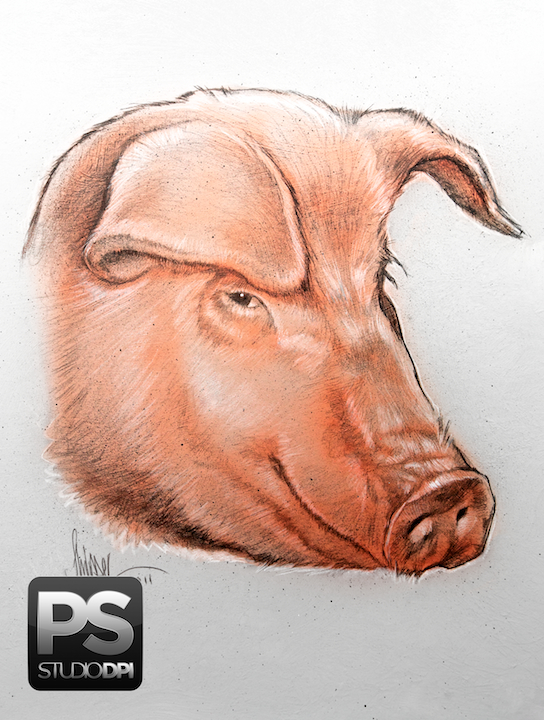 A Pig Headed Illustration