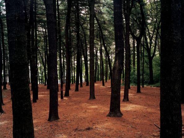 Joel Meyerowitz: Legacy - The Preservation of Wilderness of New York City Parks  Art New England Online  ( April 2011)