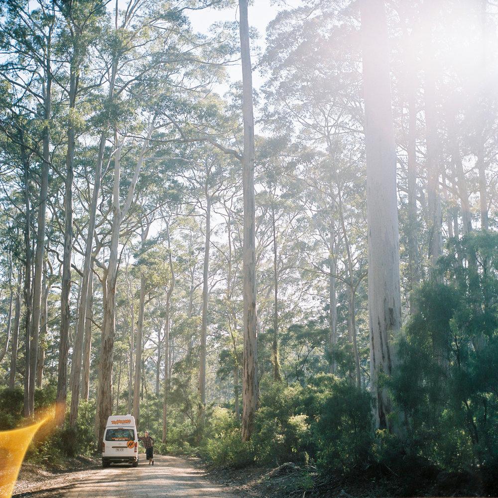 Wald in Westaustralien.jpg