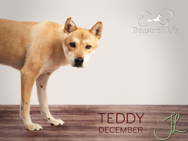 12_TEDDY.jpg