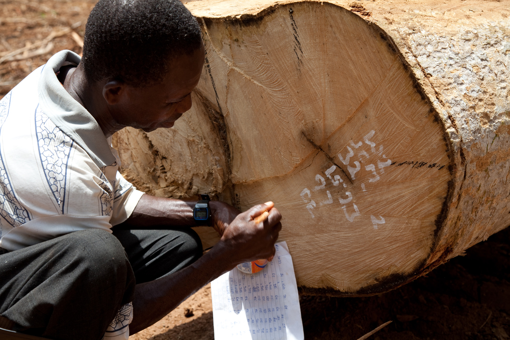 Marking Serial Number on Log - West Africa