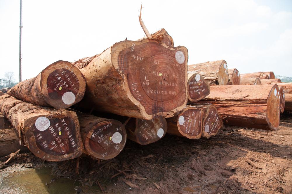 Log Pile - Central Africa