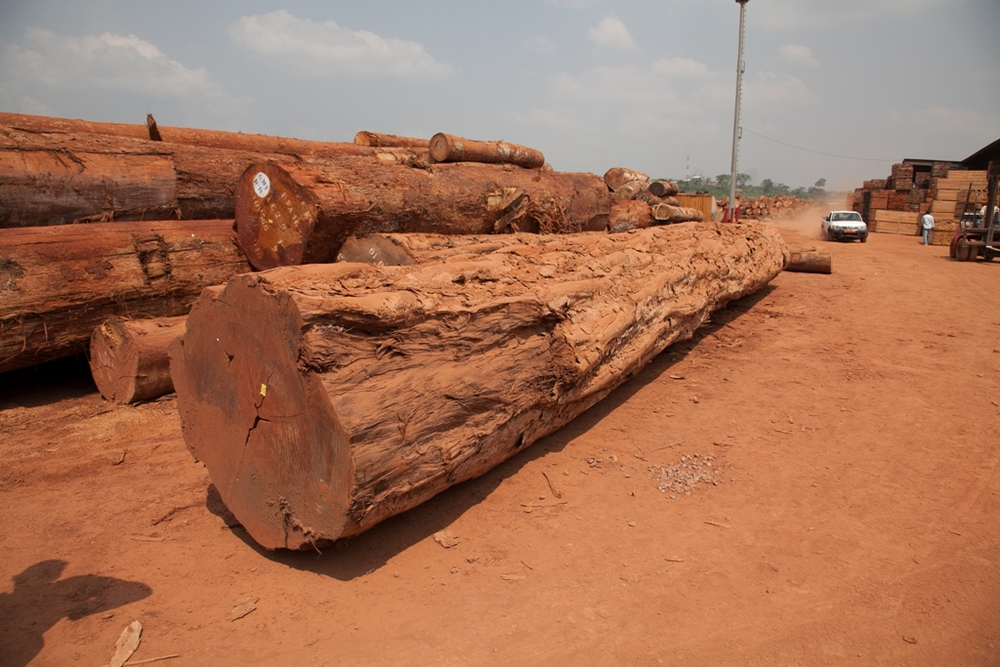 Log Pile Cameroon-3716 Large.jpg