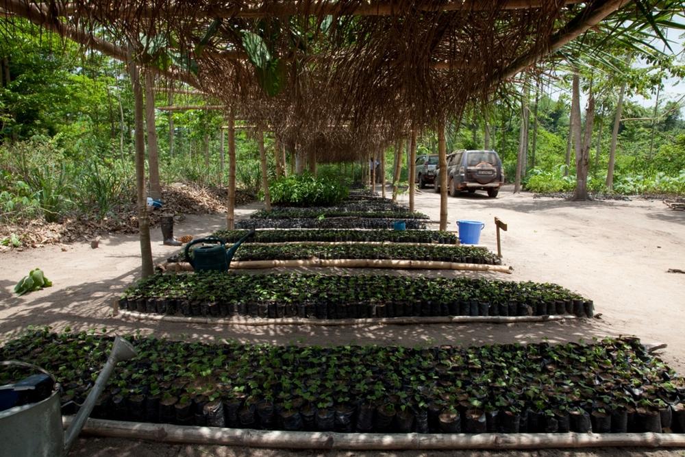 Saw Mill Tree Nursery in West Africa.