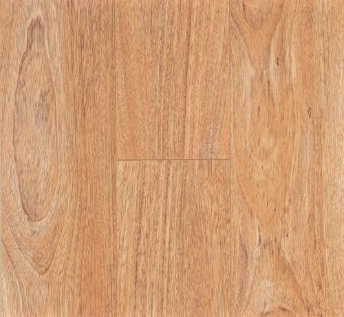 tasmanian-oak1.jpg