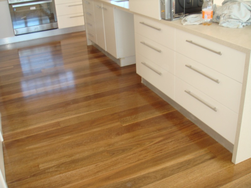 Spotted Gum 1.jpg