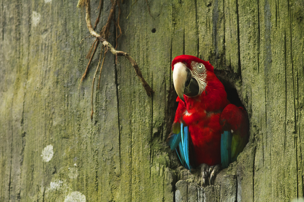 Somewhere in the rainforest Read about The pink macaw Comments