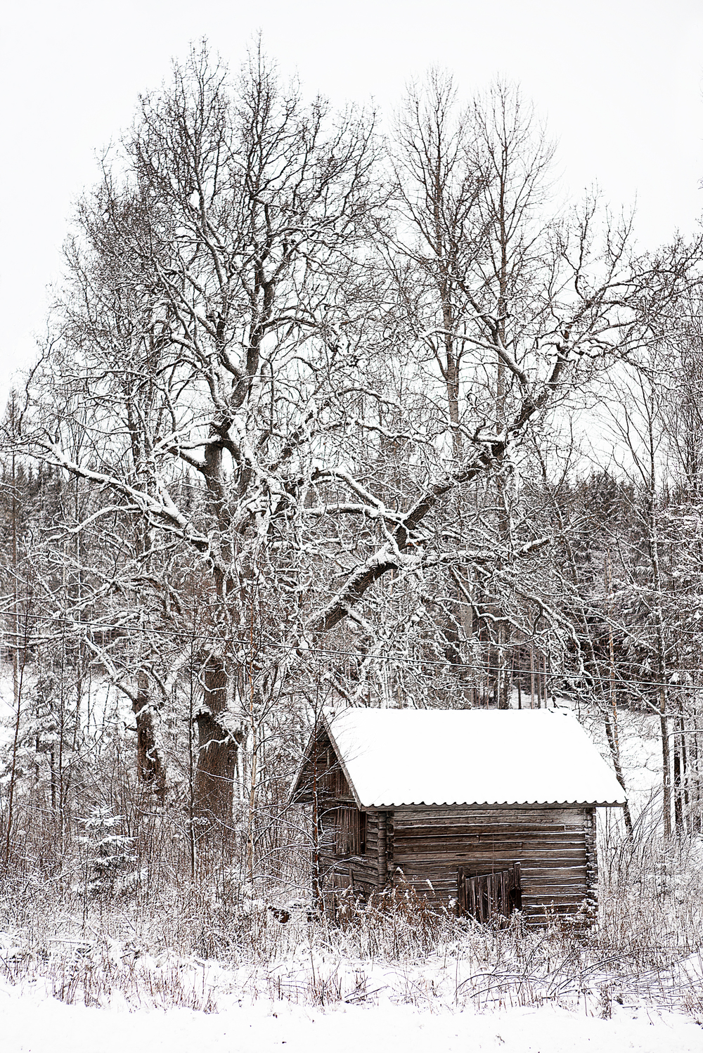 Winter silence Comments