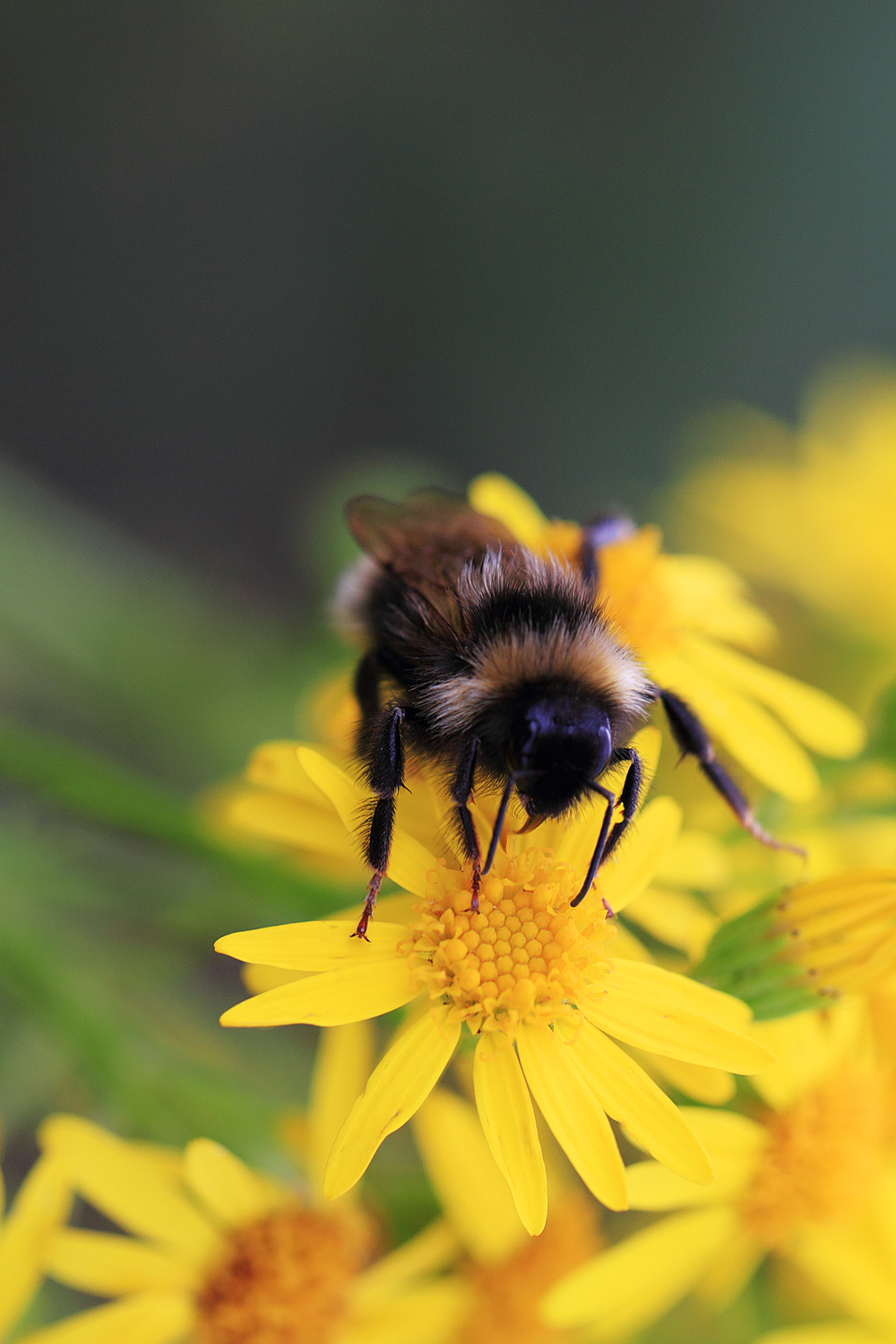 Busy days Read about The bumblebee Comments