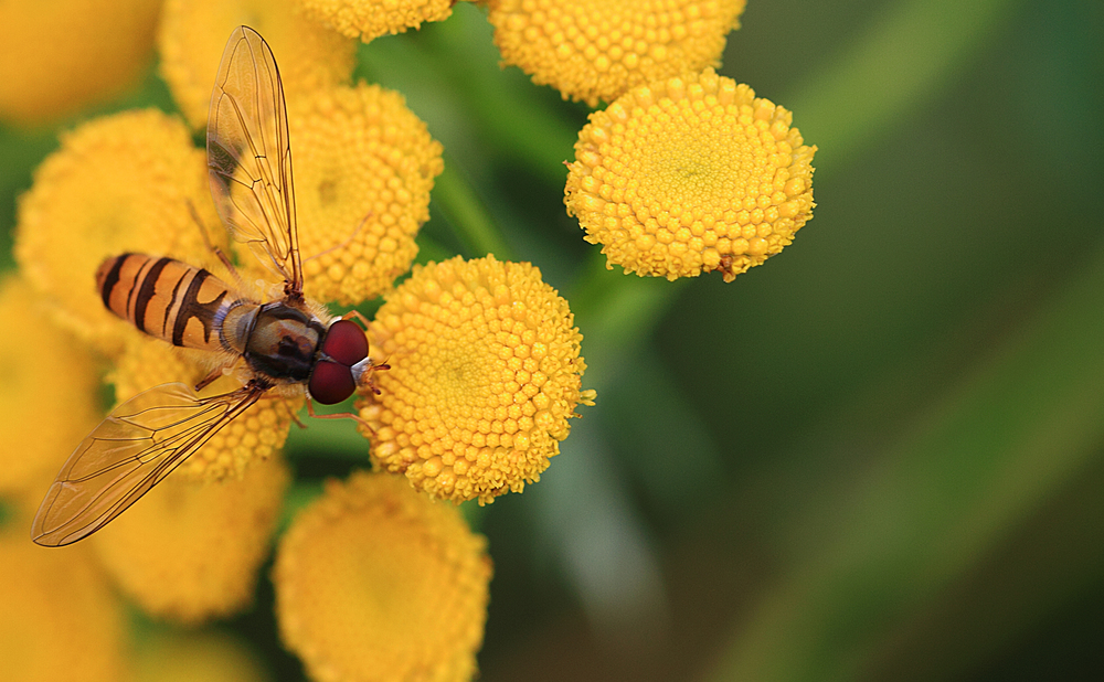 Home turf Read about The hoverflies Comments