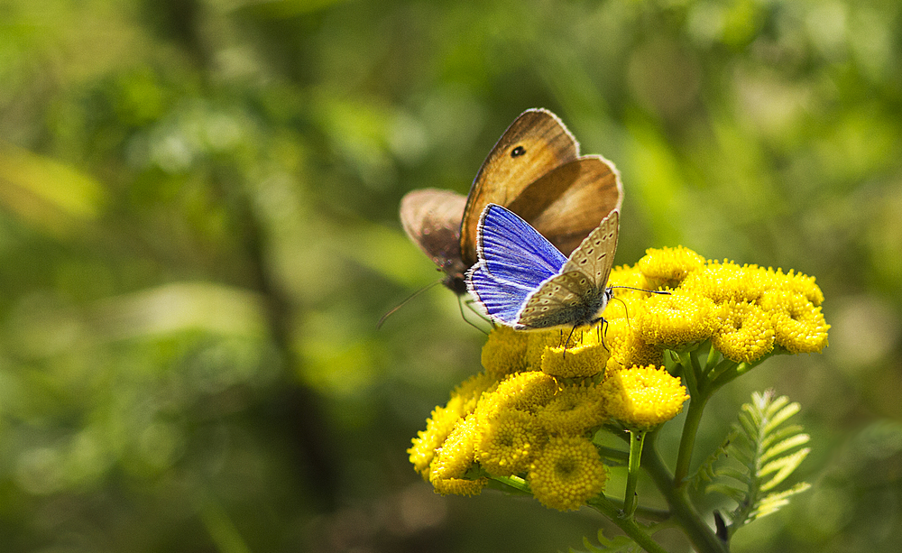 See you again next year Read about The common blue and the meadow brown butterfly Comments