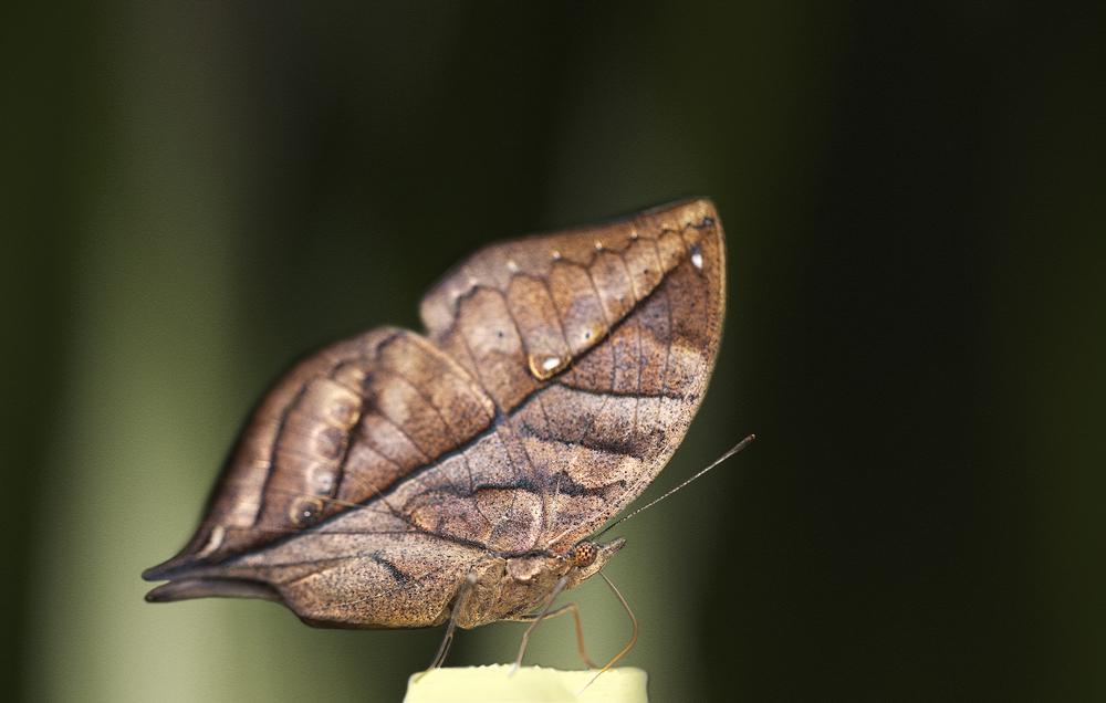 I'm a leaf I am Comments