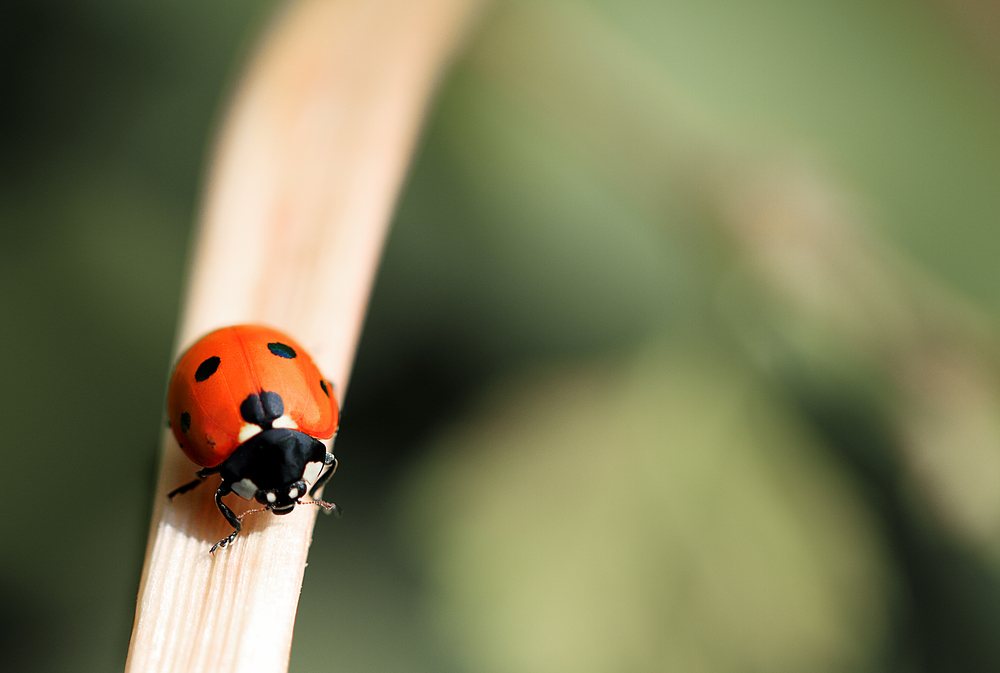 As soon as you're gone I miss you Read about The Coccinellidae (/ˌkɒksɪˈnɛlɪdaɪ/) Comments