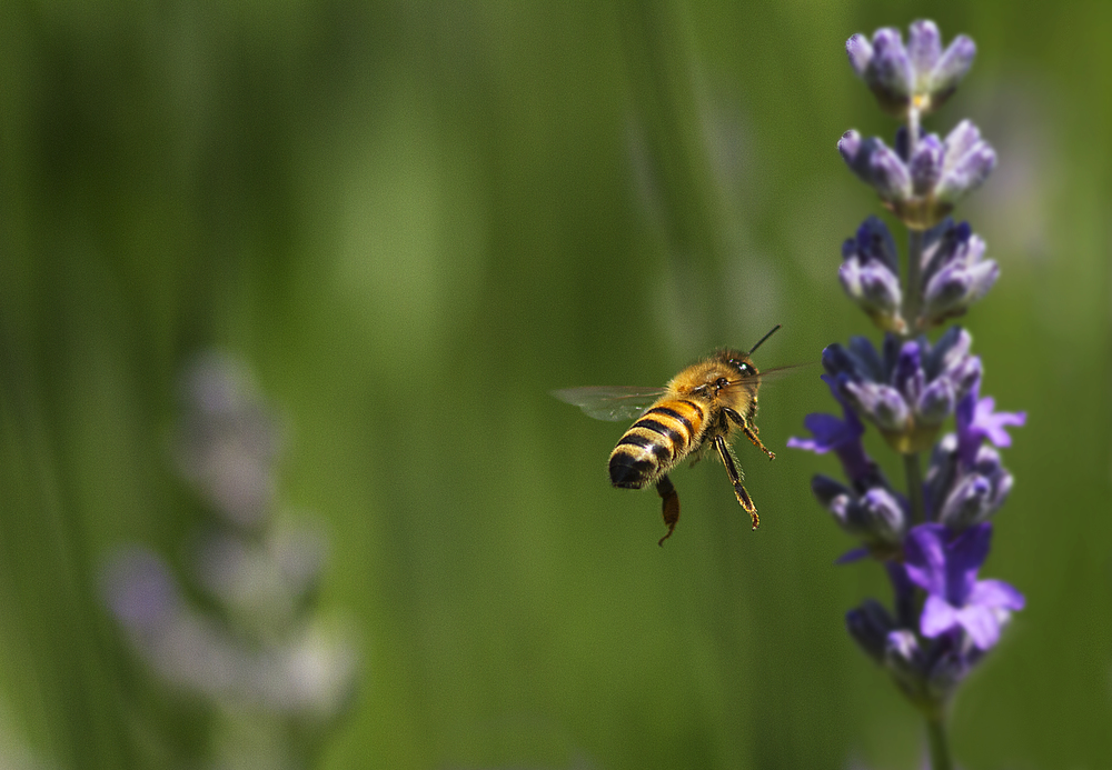 It is in my DNA Read about The honey bee Comments