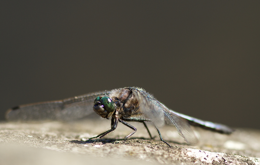 Old warrior Read about The dragonfly Comments