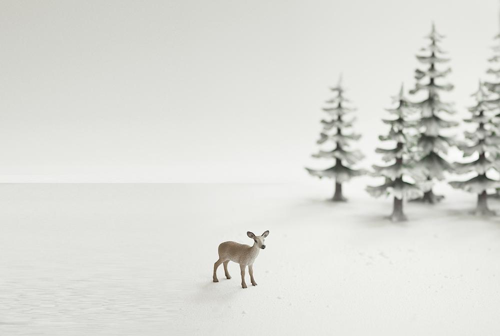 Winter wonder land Comments