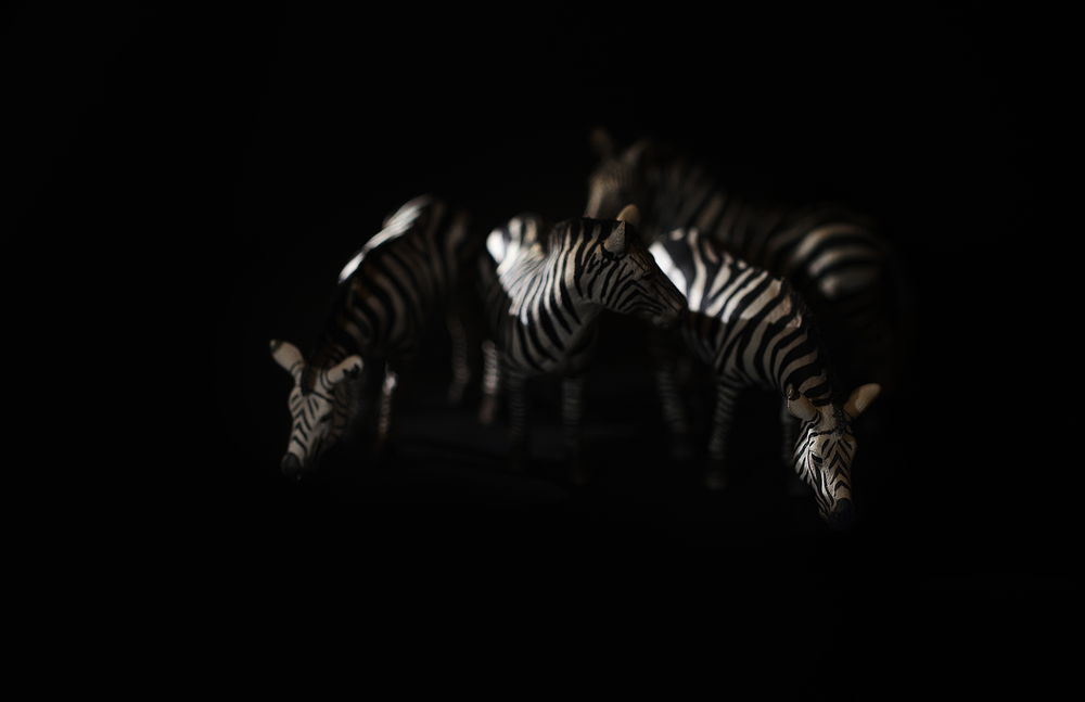 Zebras in the night Comments