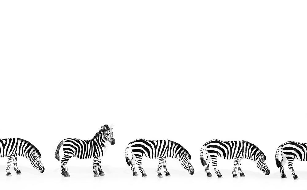More Zebras Comments