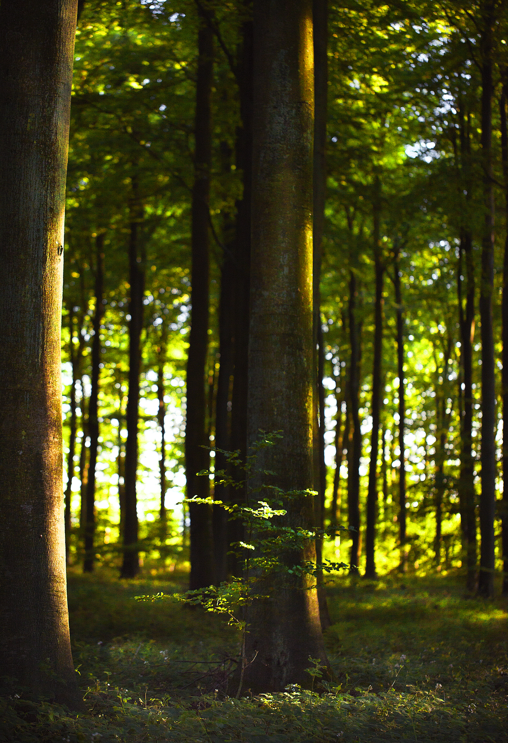 Light playing in the wood Comments